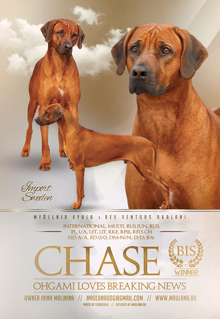 chase2016