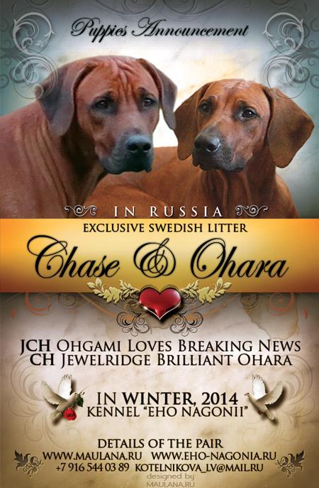 Chase-Ohara